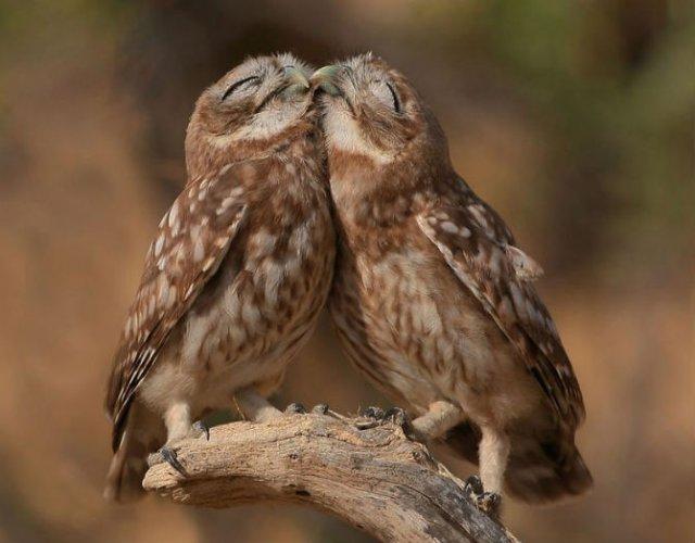 Dragostea pluteste in aer: Tandrete in lumea animala - Poza 3