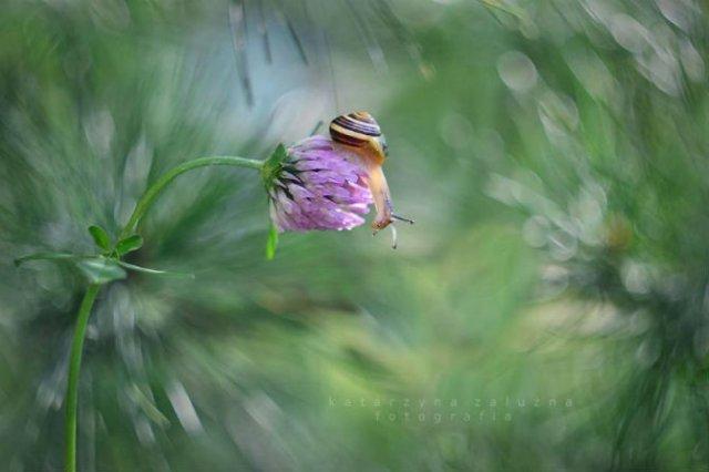Florile ochilor mei: Picturi din sanul naturii - Poza 8