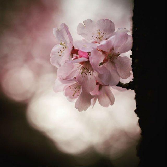 Natura si poezie, in poze superbe - Poza 9