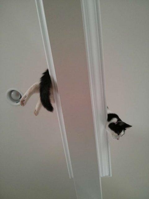 Poze haioase cu pisici neastamparate - Poza 13