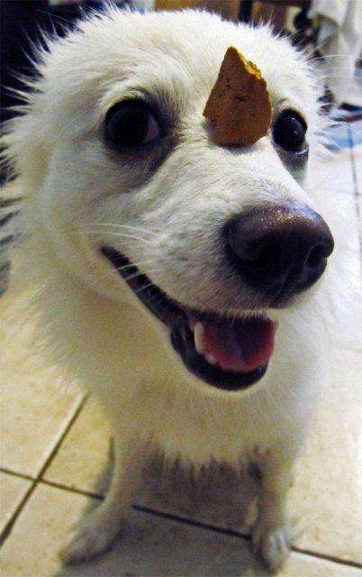 Cei mai pasnici caini, in opt poze haioase - Poza 4