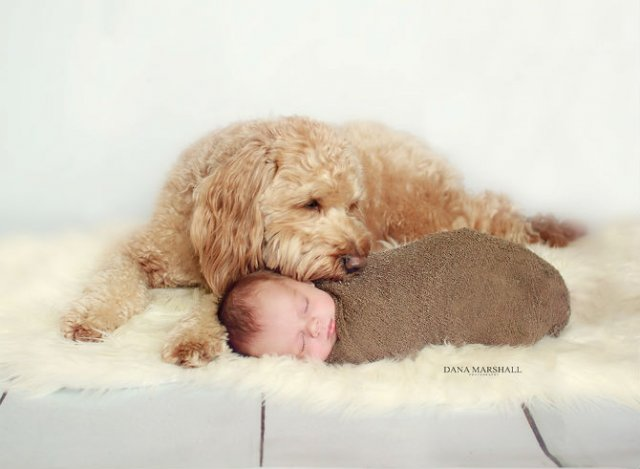 Animale si copilasi, intr-un pictorial superb - Poza 7