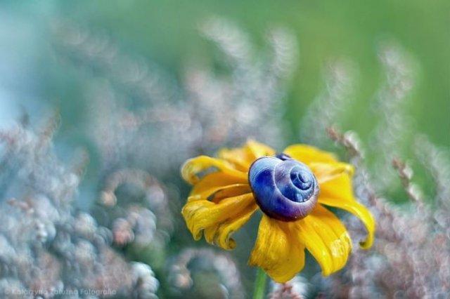 Florile ochilor mei: Picturi din sanul naturii - Poza 7