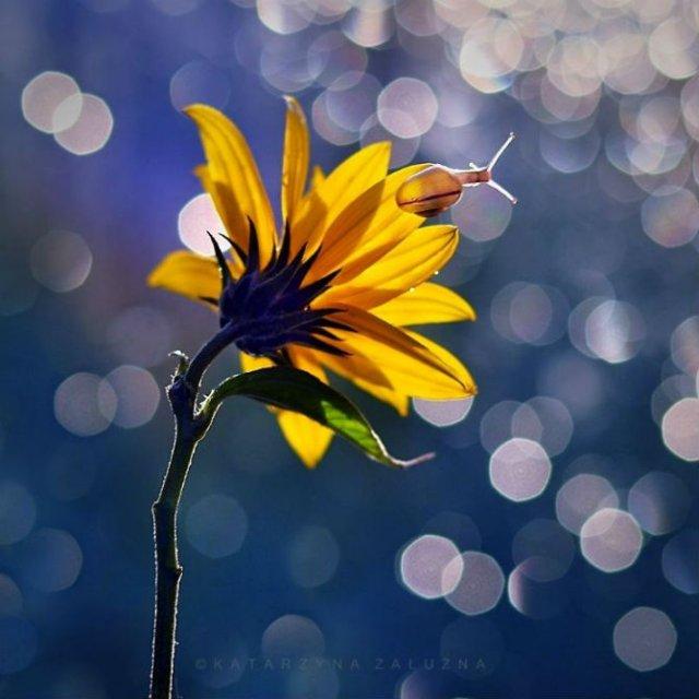 Florile ochilor mei: Picturi din sanul naturii - Poza 3