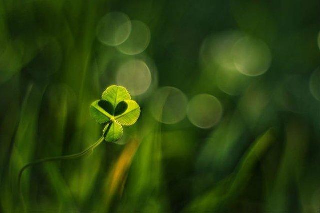 Florile ochilor mei: Picturi din sanul naturii - Poza 6
