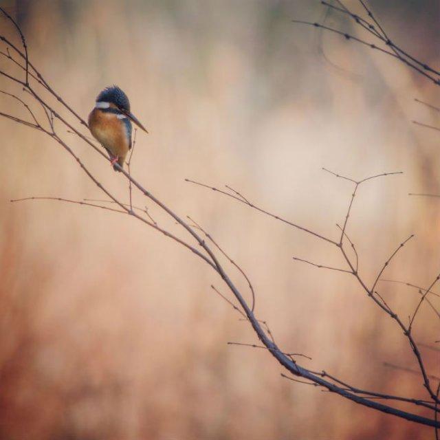 Natura si poezie, in poze superbe - Poza 8