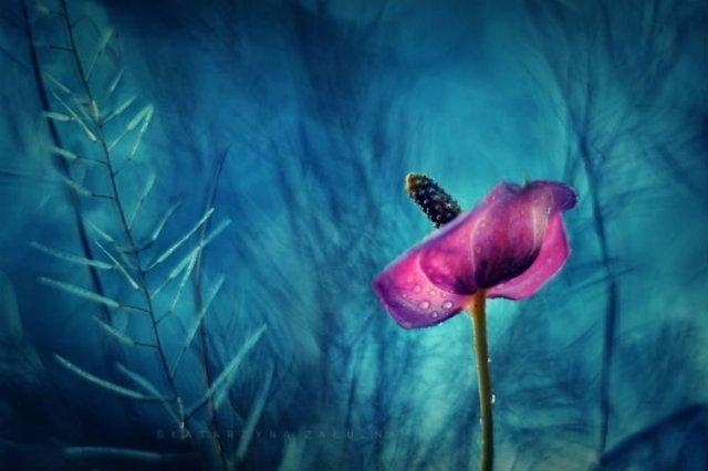 Florile ochilor mei: Picturi din sanul naturii - Poza 4