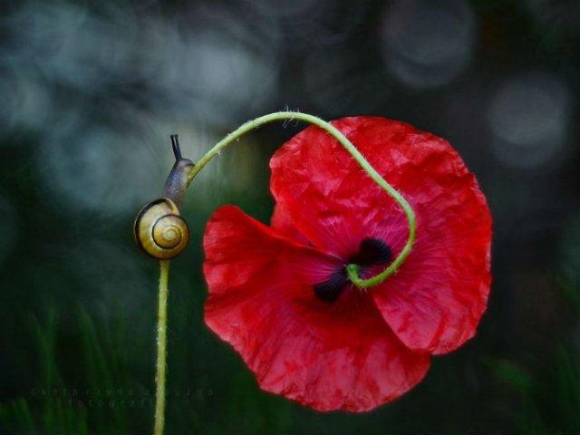 Florile ochilor mei: Picturi din sanul naturii - Poza 5