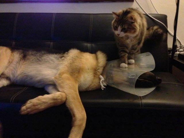Poze haioase cu pisici neastamparate - Poza 12