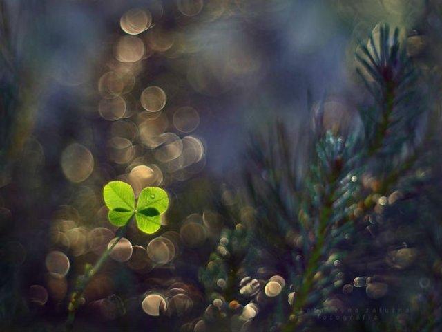 Florile ochilor mei: Picturi din sanul naturii - Poza 1