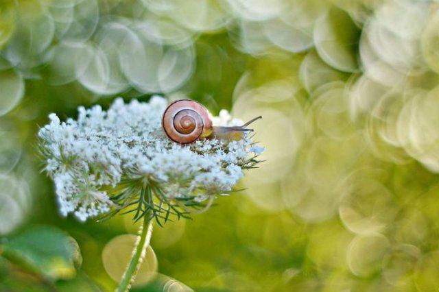 Florile ochilor mei: Picturi din sanul naturii - Poza 2