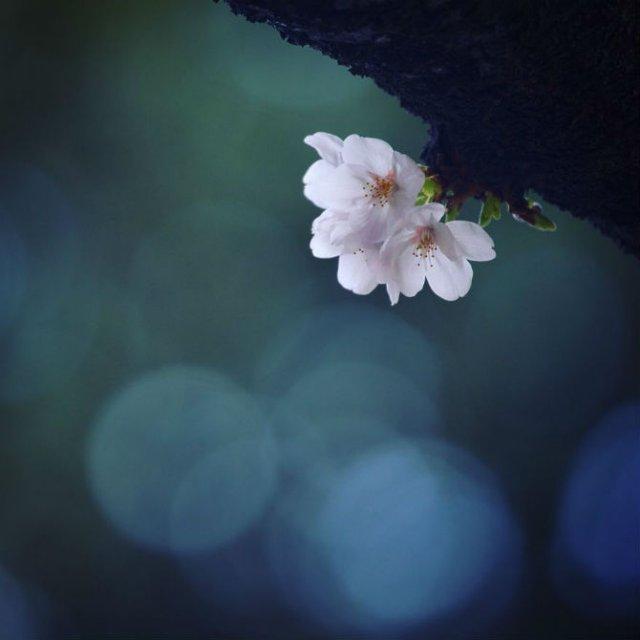 Natura si poezie, in poze superbe - Poza 7