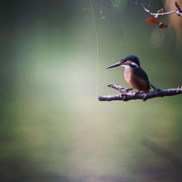 Natura si poezie, in poze superbe - Poza 3