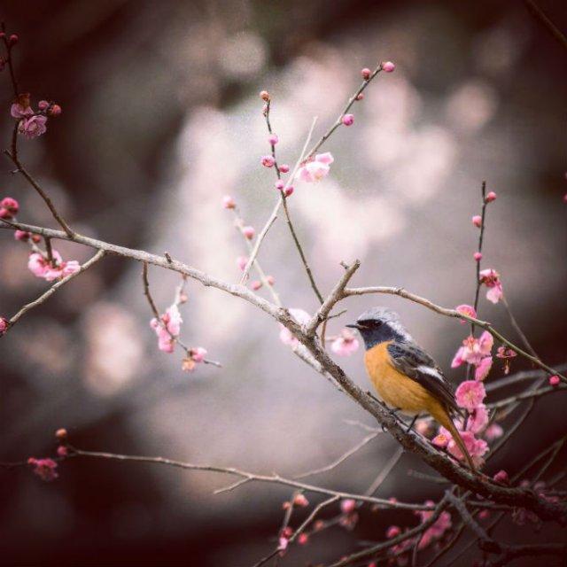 Natura si poezie, in poze superbe - Poza 6