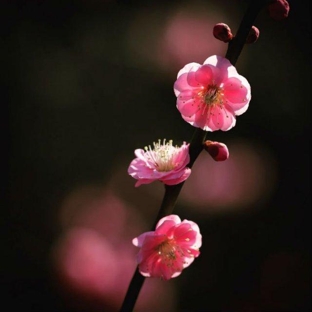 Natura si poezie, in poze superbe - Poza 5