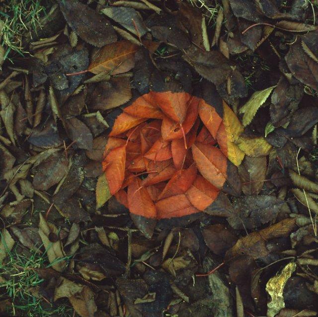 Ansambluri artistice cu resturi din natura - Poza 19