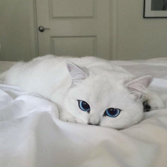 Pisicuta cu cei mai frumosi ochi din lume - Poza 4