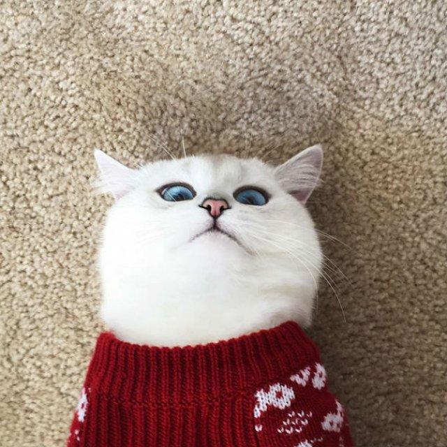 Pisicuta cu cei mai frumosi ochi din lume - Poza 5