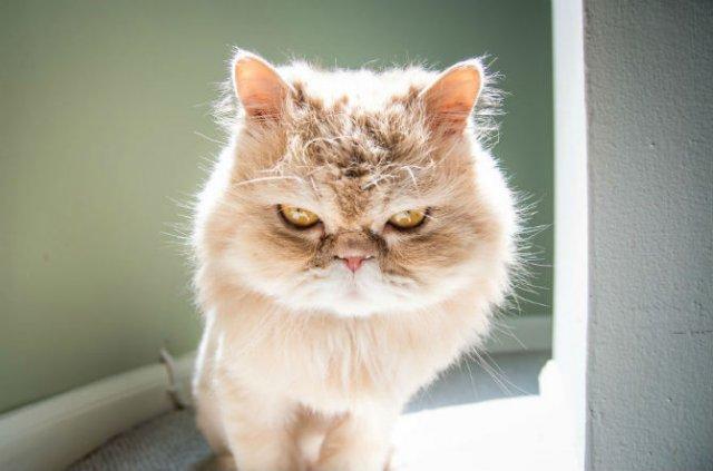 Expresiile pisicilor, in poze sugestive - Poza 1