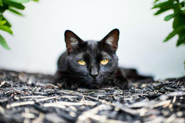 Expresiile pisicilor, in poze sugestive - Poza 10