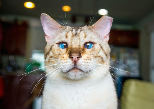 Expresiile pisicilor, in poze sugestive - Poza 2