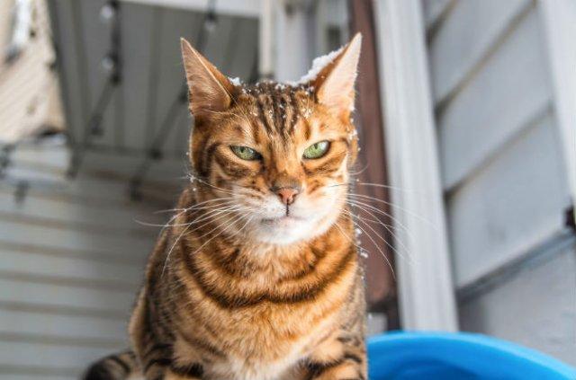 Expresiile pisicilor, in poze sugestive - Poza 3