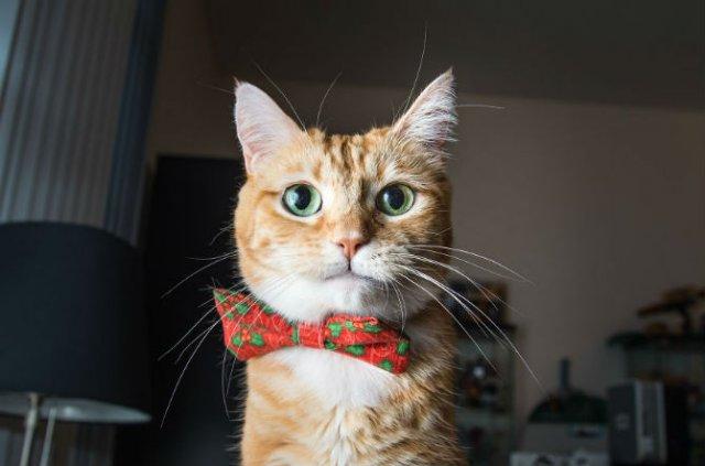 Expresiile pisicilor, in poze sugestive - Poza 4