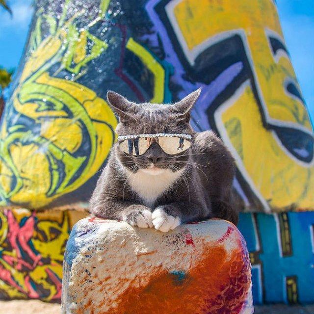 Expresiile pisicilor, in poze sugestive - Poza 5