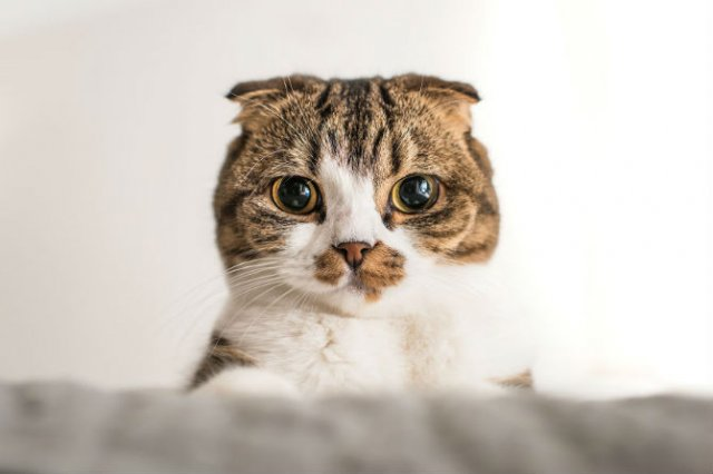 Expresiile pisicilor, in poze sugestive - Poza 6