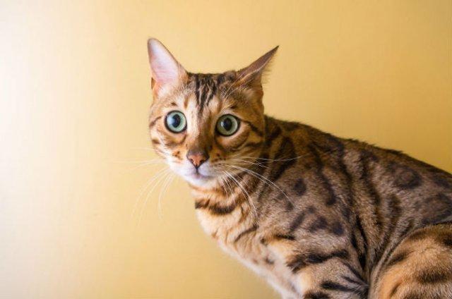 Expresiile pisicilor, in poze sugestive - Poza 8
