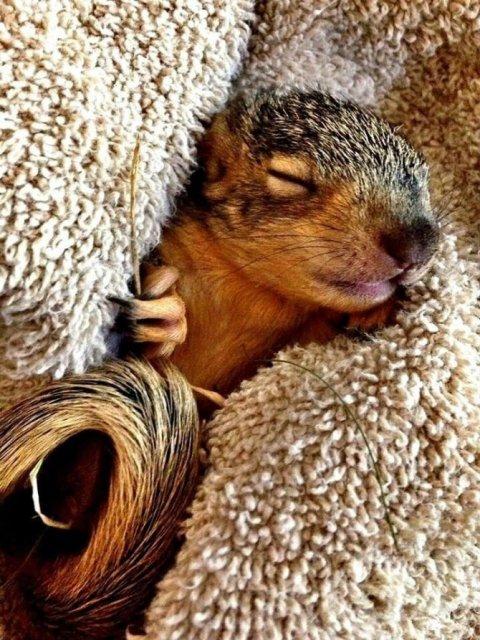 Cele mai simpatice animale, in 15 poze adorabile - Poza 11