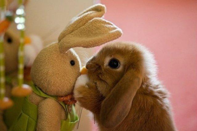 Cele mai simpatice animale, in 15 poze adorabile - Poza 12