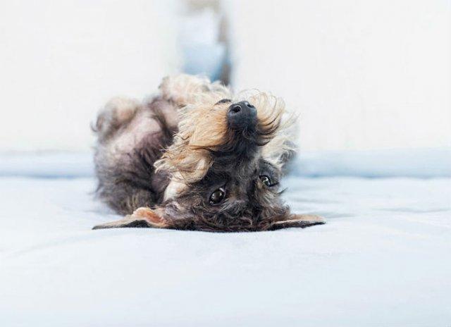 Pictorialul sucit cu cei mai simpatici caini - Poza 8