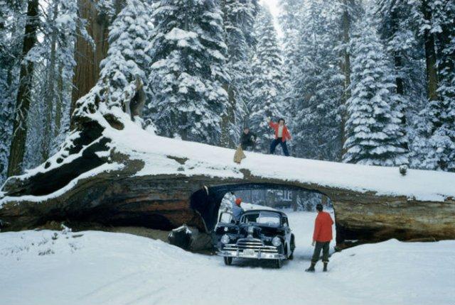 15 Fotografii nepublicate, din arhivele National Geographic - Poza 12