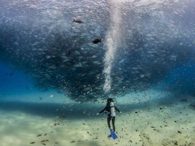 National Geographic: Cele mai bune fotografii din 2015 - Poza 9