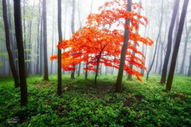 Un vis de toamna, printre copaci - Poza 11