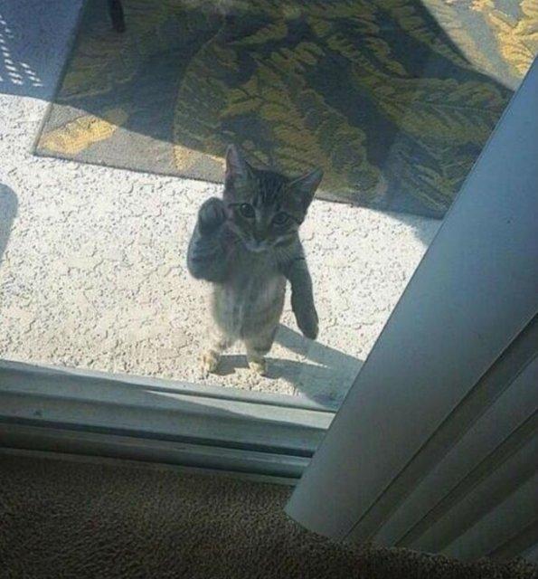 Protestele felinelor: 13 pisici incuiate pe afara, in crize - Poza 1