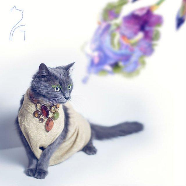 Cea mai cocheta pisica, in poze de colectie - Poza 14