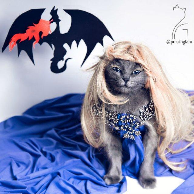 Cea mai cocheta pisica, in poze de colectie - Poza 15