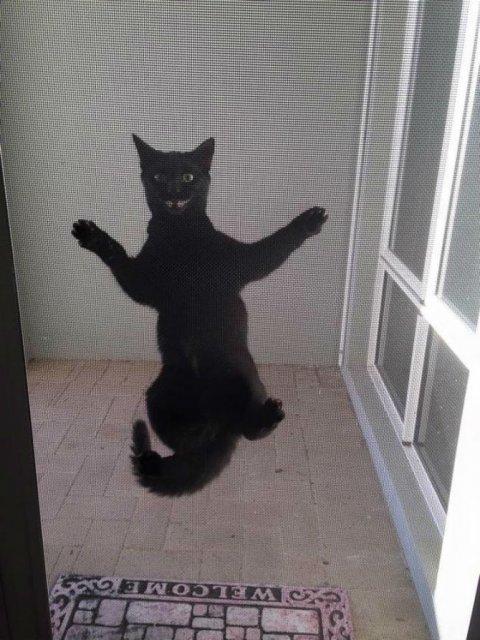 Protestele felinelor: 13 pisici incuiate pe afara, in crize - Poza 2