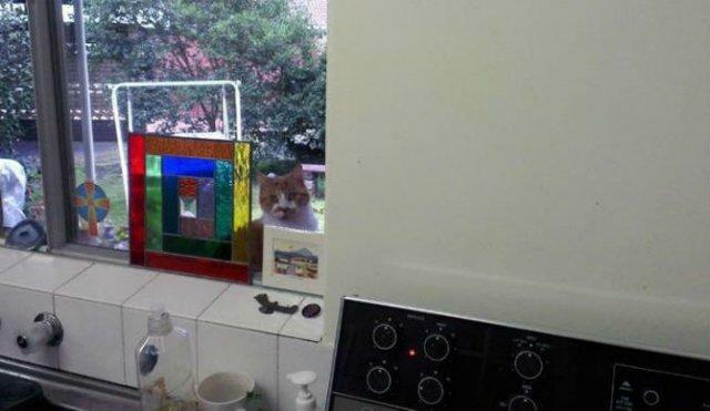 Protestele felinelor: 13 pisici incuiate pe afara, in crize - Poza 4