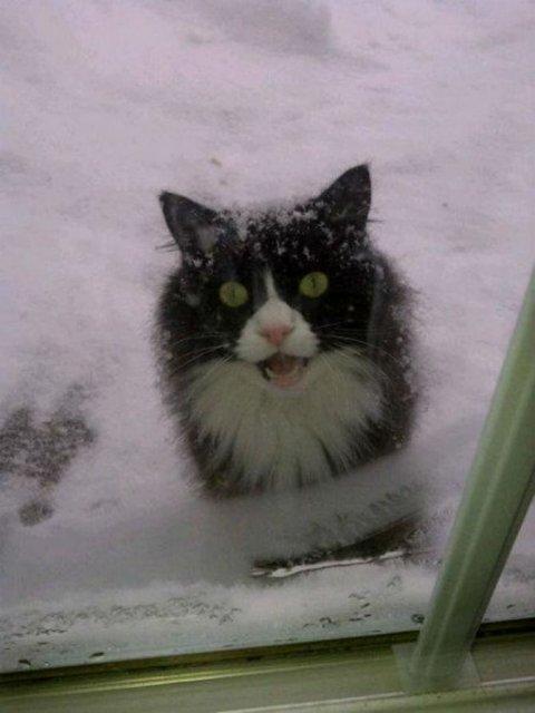 Protestele felinelor: 13 pisici incuiate pe afara, in crize - Poza 5