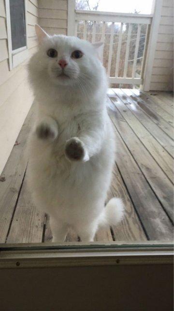 Protestele felinelor: 13 pisici incuiate pe afara, in crize - Poza 7