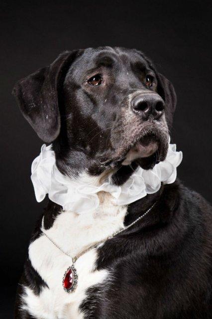 Nobletea animalelor: 9 Portrete ale sufletelor aristocrate - Poza 8