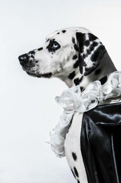 Nobletea animalelor: 9 Portrete ale sufletelor aristocrate - Poza 9
