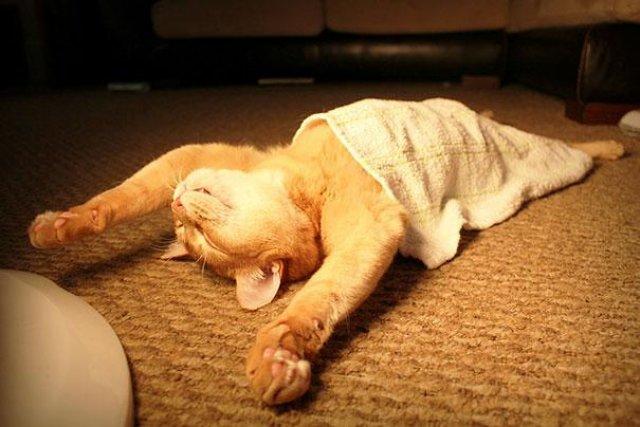 17 Pisici care dorm in cele mai haioase pozitii - Poza 12
