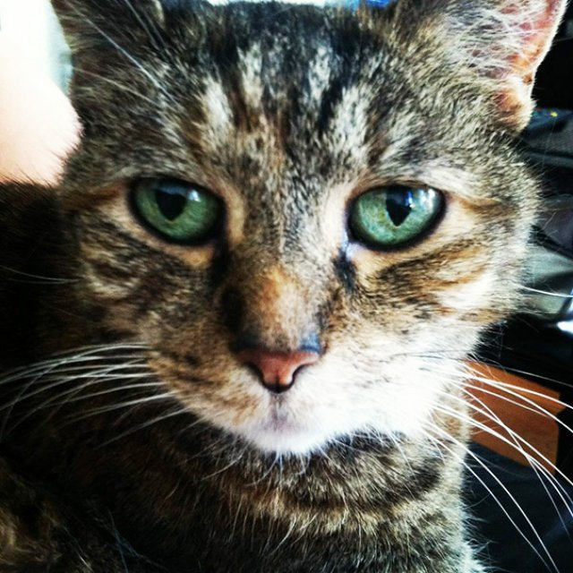 Cele mai batrane pisici adoptate de cei mai inimosi oameni - Poza 3