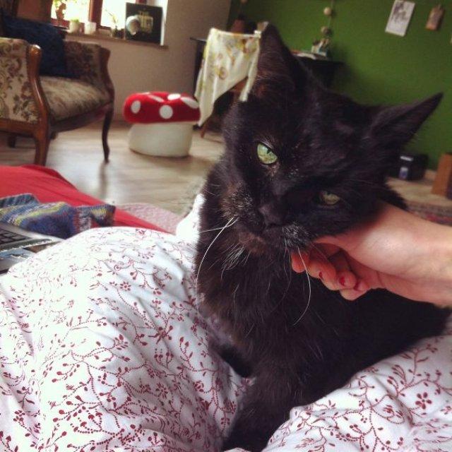 Cele mai batrane pisici adoptate de cei mai inimosi oameni - Poza 4