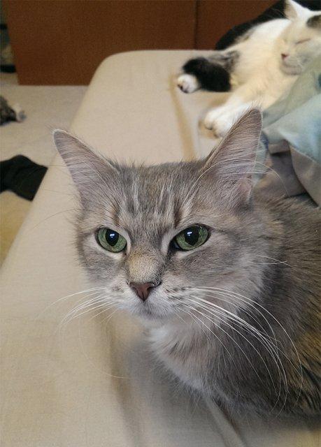 Cele mai batrane pisici adoptate de cei mai inimosi oameni - Poza 7