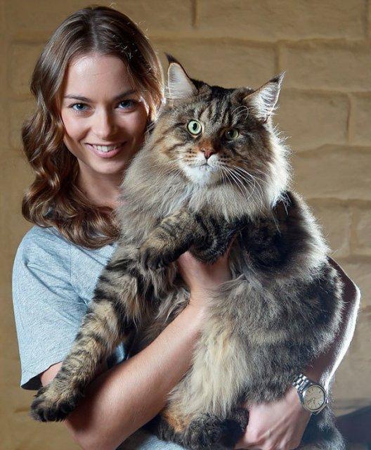 Feline XXL: Cele mai mari pisici din lume - Poza 9